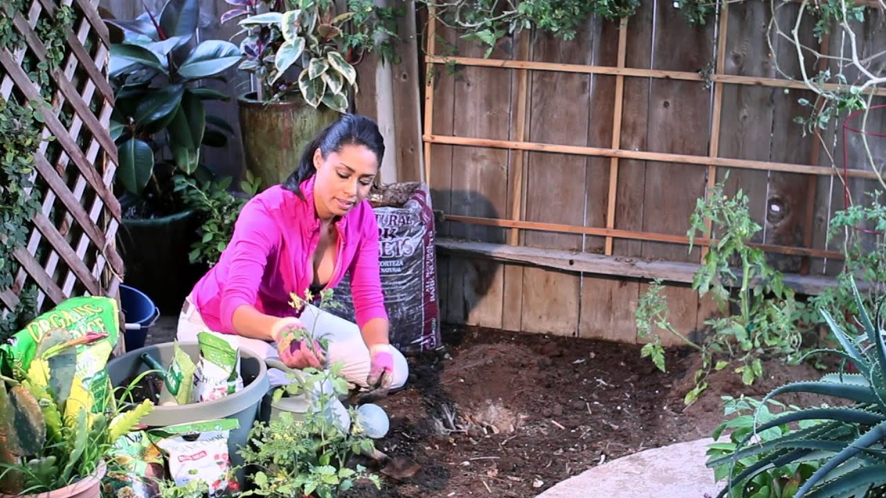 how to plant tomatoes using bone meal sugar epsom salts the chef 39 s garden youtube. Black Bedroom Furniture Sets. Home Design Ideas