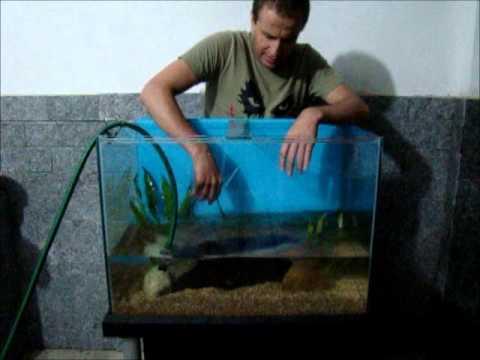 Como montar e manter um aquário básico ' PARA  INICIANTES'