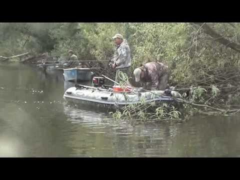 ловля сома на оби