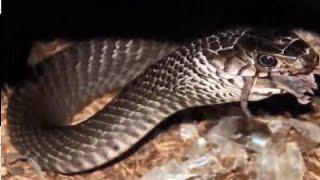 Chuyện lạ có thật - Khám phá động rắn khổng lồ ,và câu chuyện huyền bí ,dưới chân dãy Pha Luông