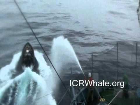 January 3, 2012 Bob Barker Small Boat's Gemini Attempts a Prop Foul On Yushin Maru # 3