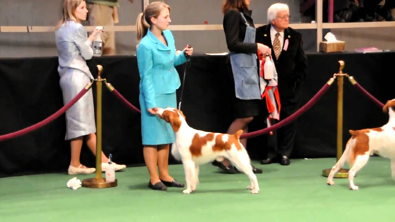 Westminster Brittany Youtube