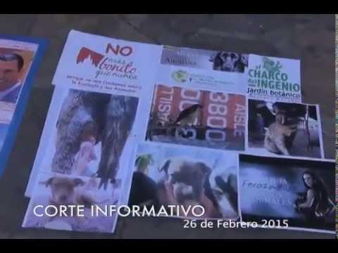 Noticias San Miguel de Allende 26 Febrero 2015