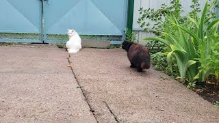 Cats walking after a heavy rain