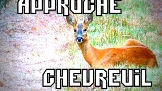 ChasseTV: Chasse Chevreuil- Hunting Approach Roe Buck 2013