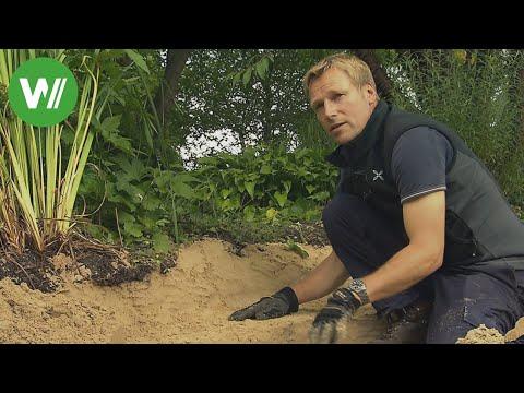 Der Garten im September - Boden verbessern und Gartenteich verschönern