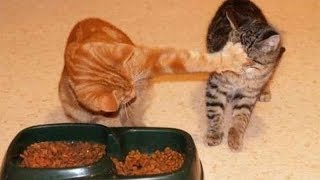 BURST into LAUGHTER NOW! // The FUNNIEST ANIMAL compilation