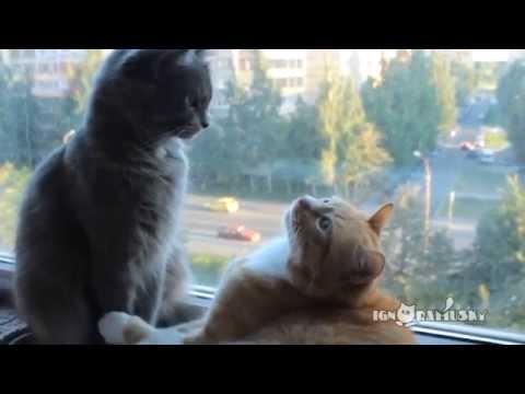 仲良し猫を毛づくろい中の...