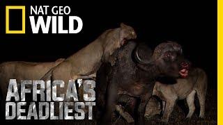 A Grisly Death   Africa's Deadliest