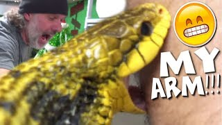 SNAKE BITES AND SNAKE FACTS with CHEWY **hilarious** | BRIAN BARCZYK