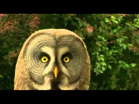 Dramatic Animals - Inception [FUNNY]