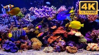 THE BEST 4K Aquarium Video
