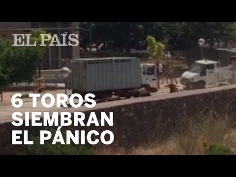 Seis toros siembran el pánico en los encierros de Vall d'Uixó