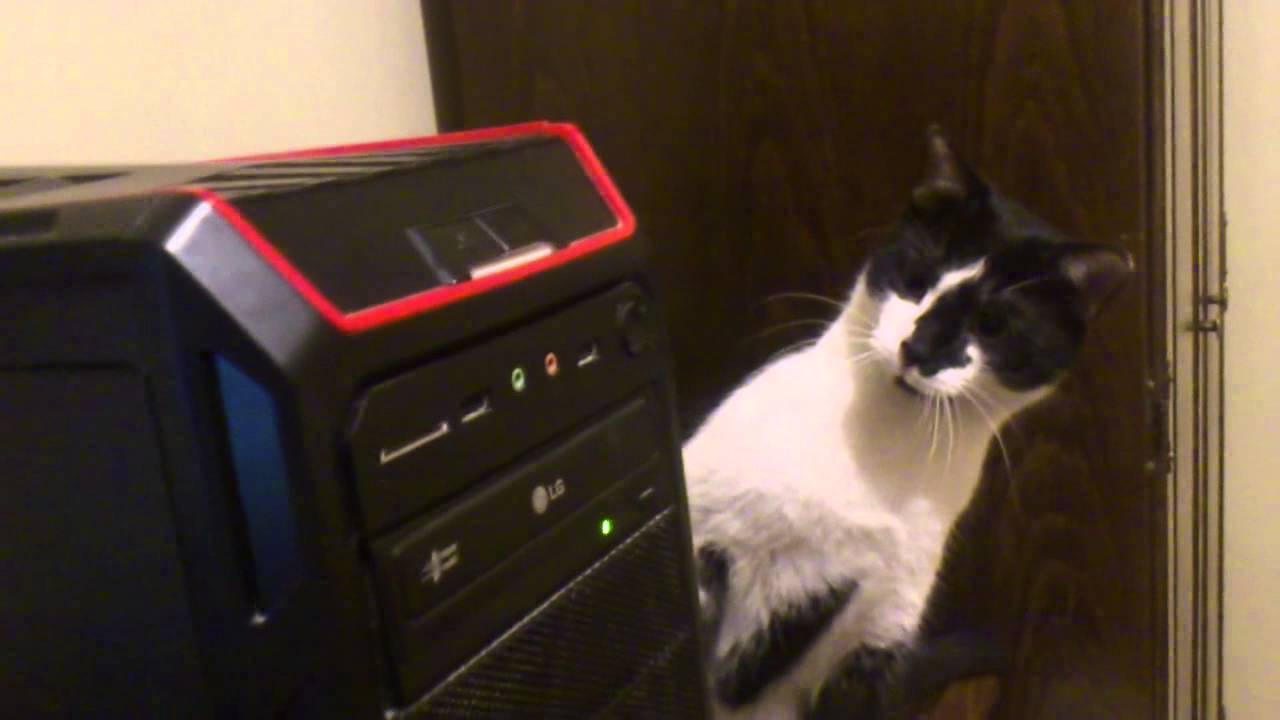 [This Cat Does Not Trust CD-ROM Technology] Video