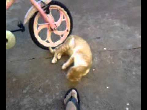 Video Do Gato.3gp video