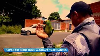 """Papagaio dedo-duro é preso por """"associação ao tráfico"""""""