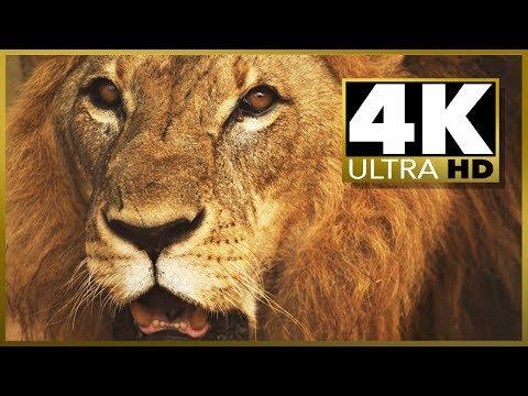 Sample 4k Uhd (ultra Hd) Video Download video