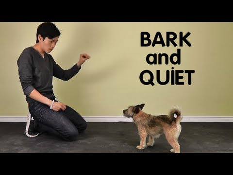 Teach Dog To Stop Barking - Treatpouch video