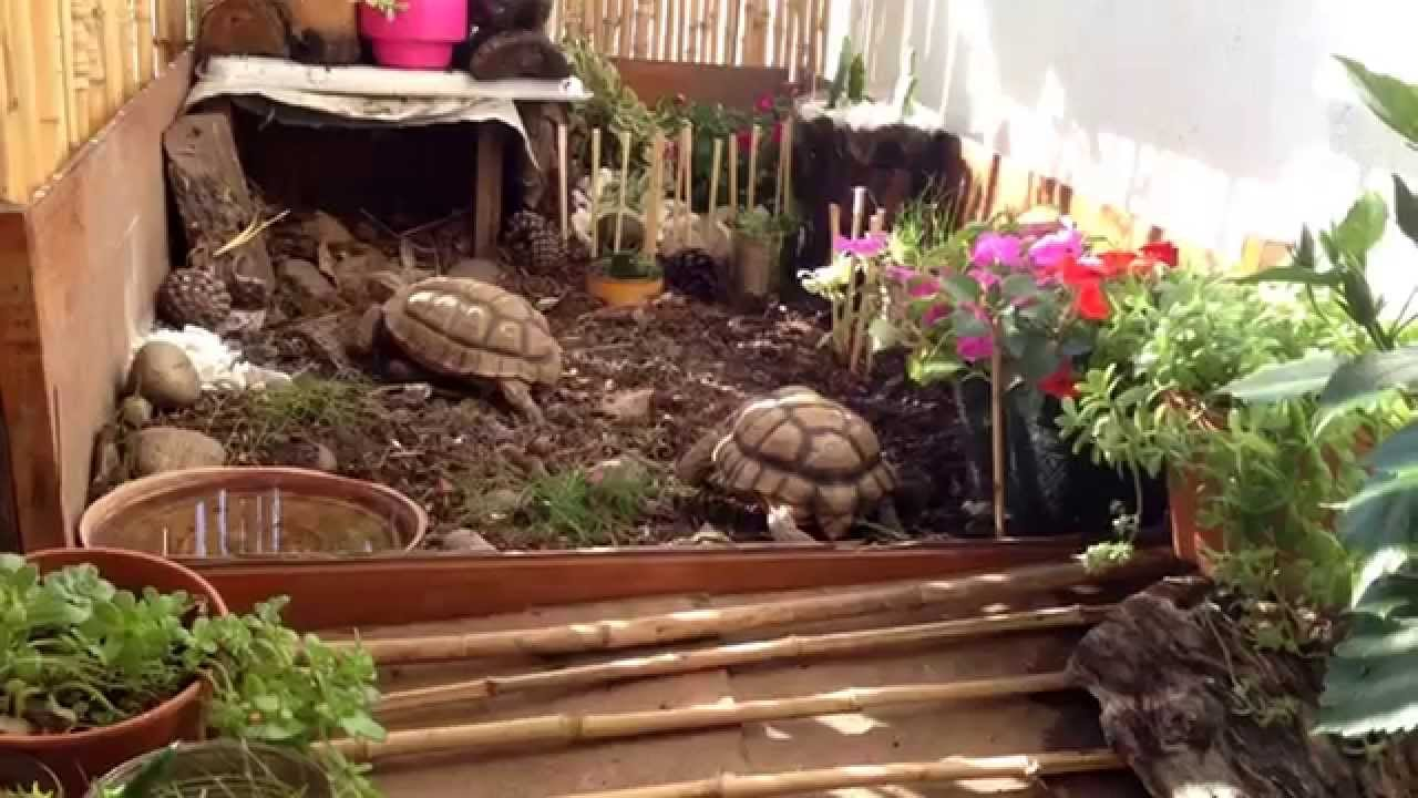 Tortuguero terrario para tortugas chilensis youtube for Como hacer un estanque en casa