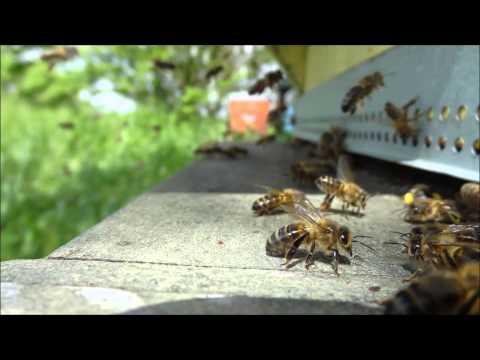 Epandage des pesticides. Olivier Fernandez sur Canal Sud Radio sept:2013