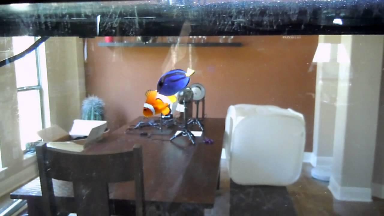 Salt water fish tank gallon dory nemo youtube for Finding dory fish tank