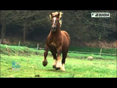 La Belle Histoire de Bernard et son cheval Qué Sauvé - Equidia Life