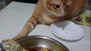 この魚クレクレと言わんばかりの猫。何度どかしても魚の頭にタッチ。
