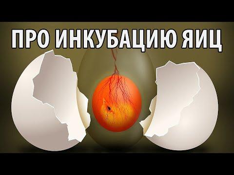 Ответы на вопросы об инкубаторах для яиц, инкубации и яйцах \ Часть 1 \ Птицеводство ТВ #4: