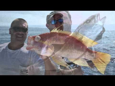Fishing Tackle and Live Bait from Fishing Shop in Sarasota, Florida Help Catch the Big Fish
