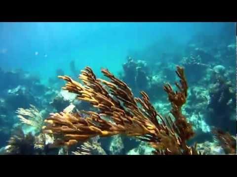 Snorkeling Goulding Cay, Bahamas