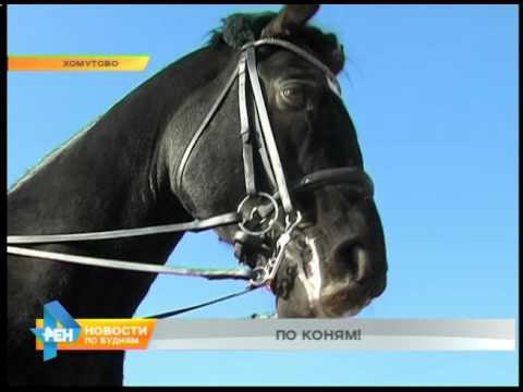 Лаборатория спорта: конный спорт