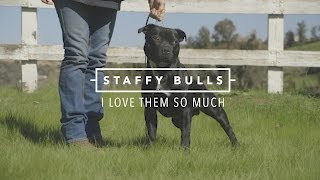 STAFFORDSHIRE BULL TERRIERS I LOVE THEM SO MUCH