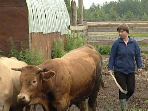 В Тарногском районе женщина в одиночку открыла животноводческую ферму