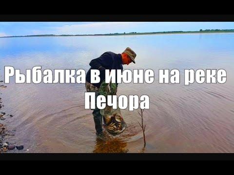 РЫБАЛКА В ИЮНЕ НА РЕКЕ ПЕЧОРА /  FISHING ON THE RIVER IN JUNE PECHORA