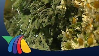 Prohíbe Cofepris venta de plantas medicinales | Noticias del Estado de México