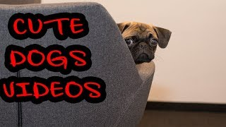 Funny and Cute Dogs Videos Compilation 2019 (part #3) |Laugh Out Loud