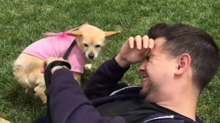 Dog pees in friends face!