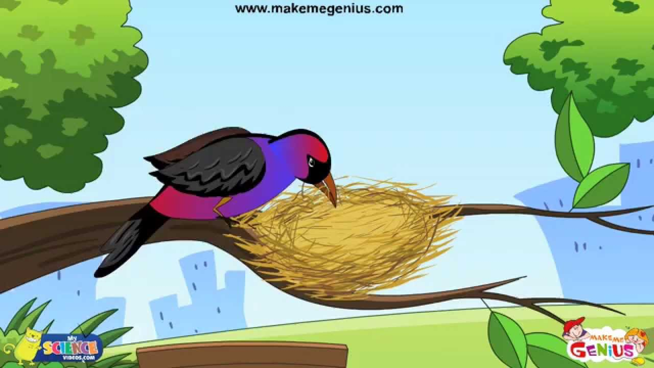 Animals Homes Birds Nests For Kids Youtube