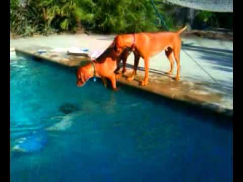 飼い主がプールに潜ると、...