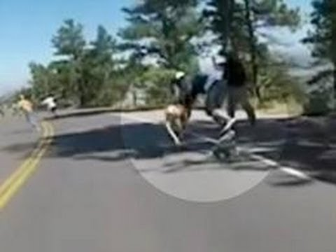 Skateboarder Hits Deer at 40 MPH Reaction