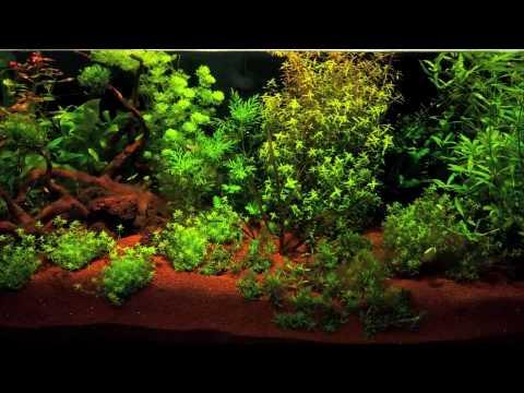 montaje y ciclado acuario plantado