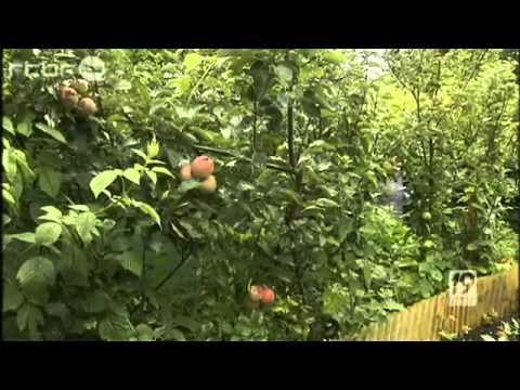 Jardin des fraternit s ouvri res visite de la rtbf youtube for Jardin a visiter