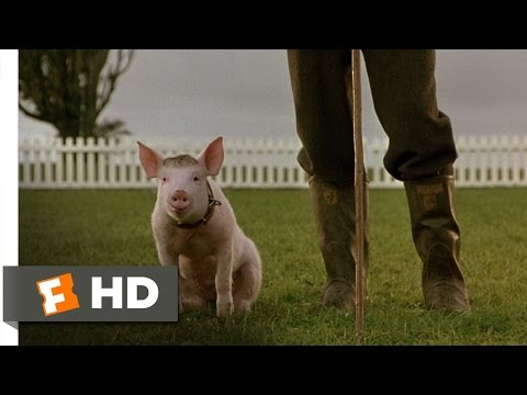 That'll Do Pig - Babe (9 9) Movie Clip (1995) Hd video