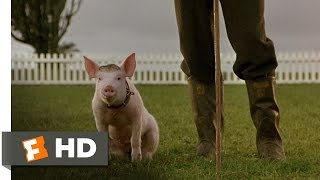 Download That'll Do Pig - Babe (9/9) Movie CLIP (1995) HD 3Gp Mp4