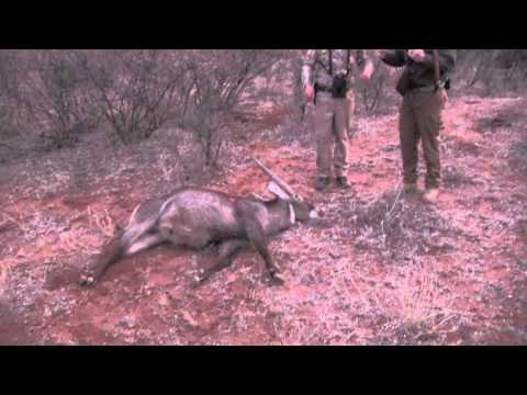 Aimpoint Trailer - Aimpoint Hunts the Globe 2