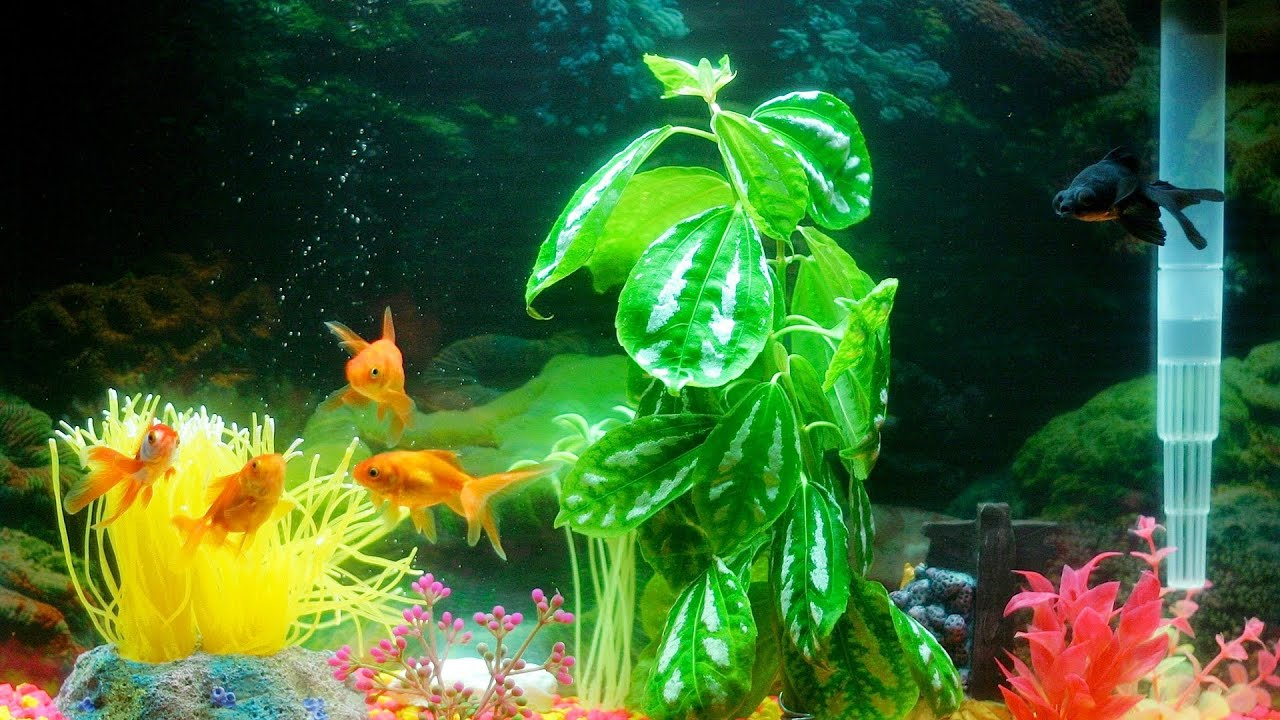 Does Your Fish Tank Need an Air Pump? Aquarium Care - YouTube