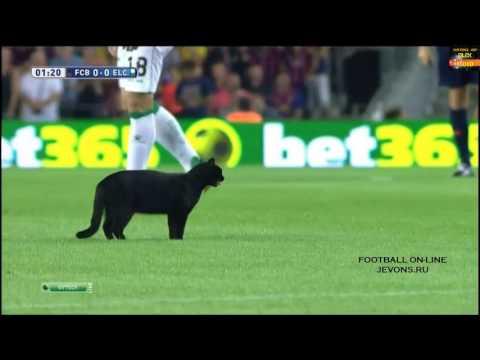 Черный кот .