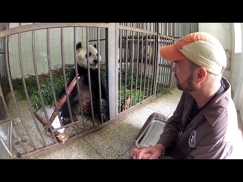 Volunteer at Giant Panda Center