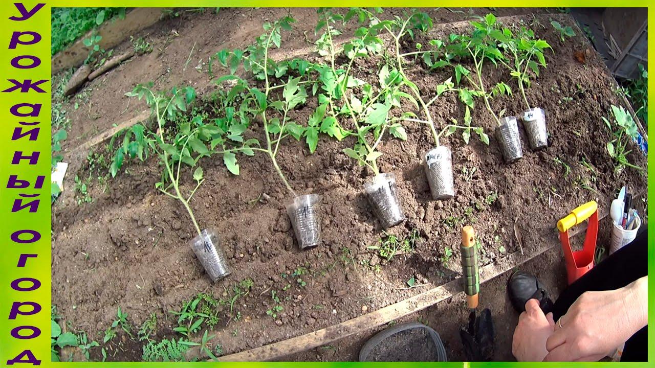 Китайский метод выращивания рассады 6