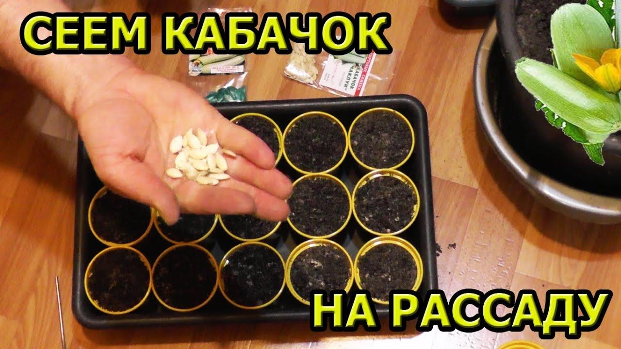Подготовка семян кабачков к посеву на рассаду в домашних условиях 79